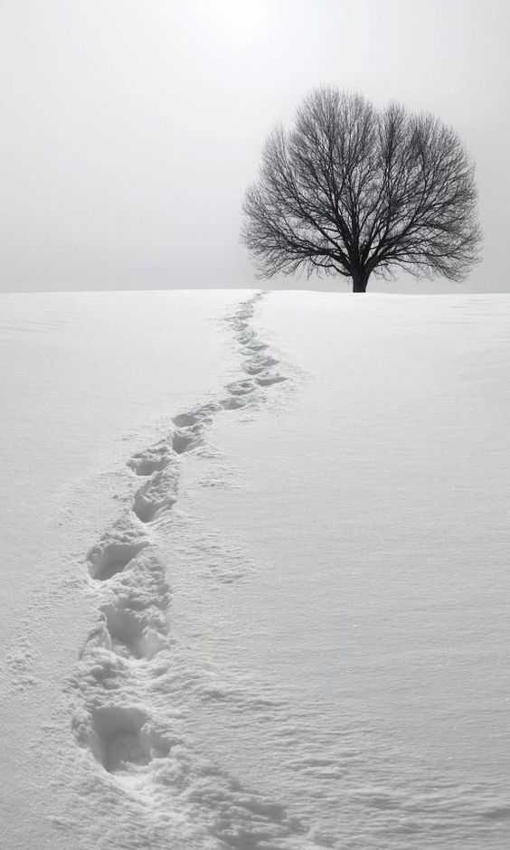 footprints-in-the-snow