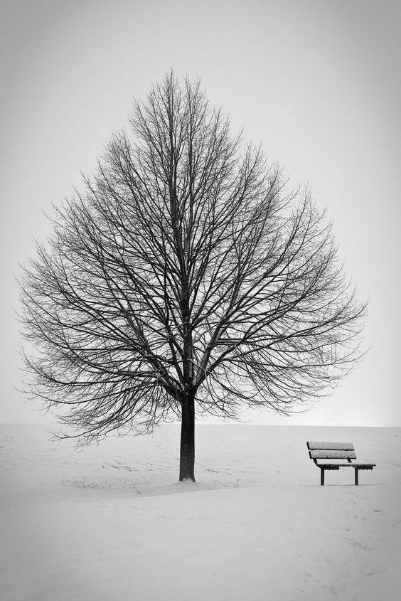 Snowy bench.jpeg